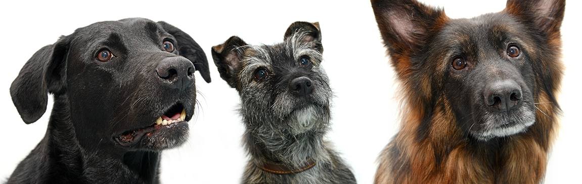 Dogday: The science behind the wag