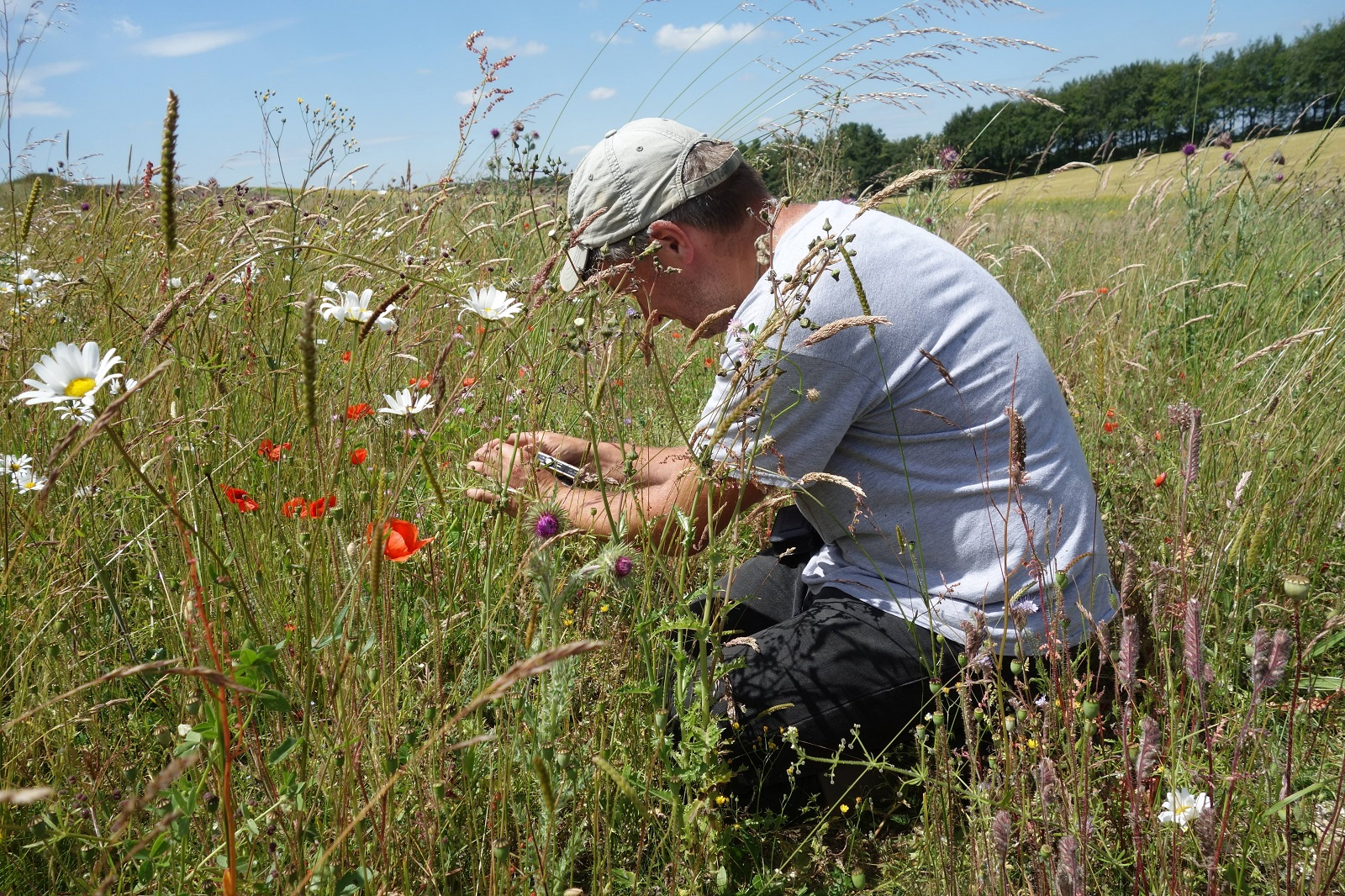 Scientist looking at flowers in the field