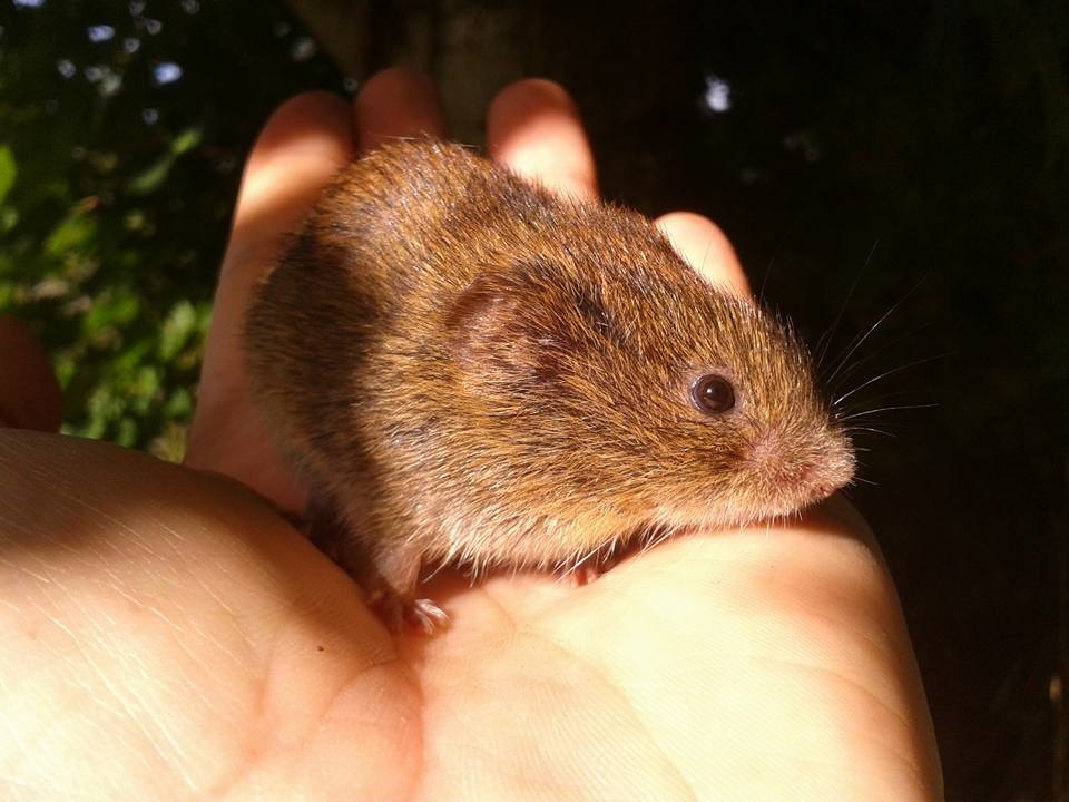 picture of a mouse being held in someones hand