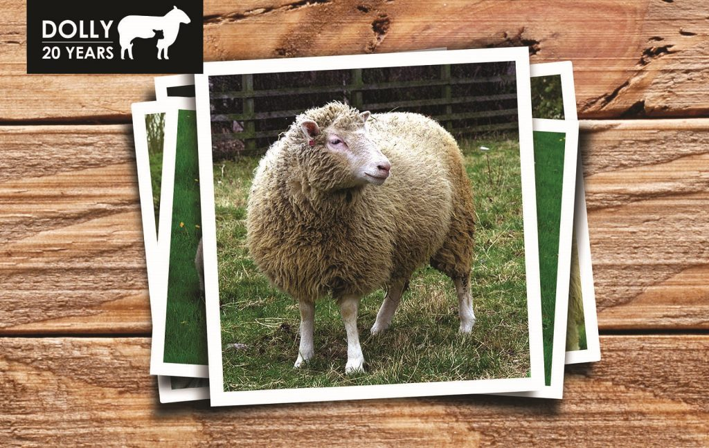 Picture of Dolly the Sheep