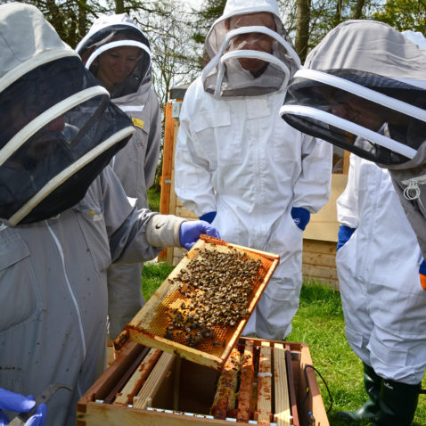 Bee Academy Open Day
