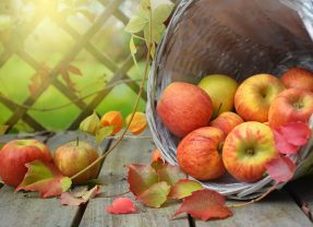 Apple Pressing and Jam making